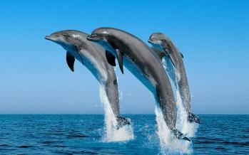 Τα Δελφίνια του Κορινθιακού Κόλπου