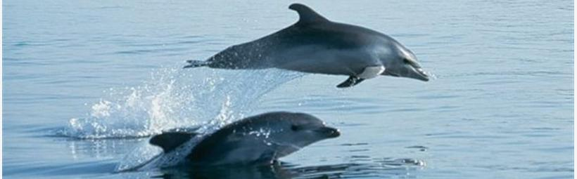 Boat tour - dolphin